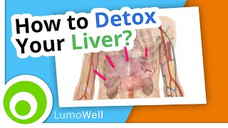 Liver cleanse: diet, foods and natural tips to detox your liver